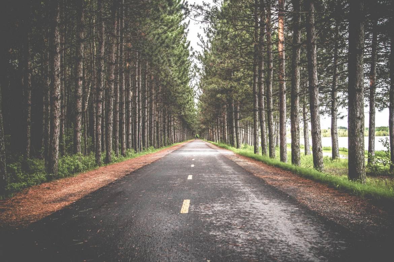 woods-road-1.jpg