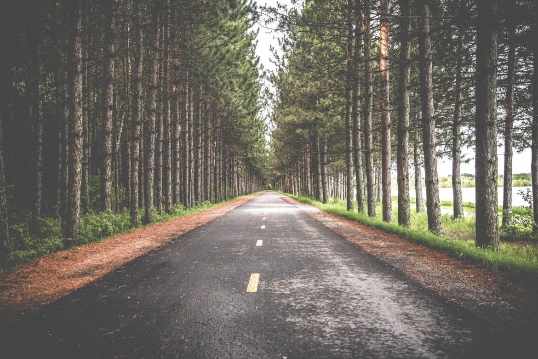 woods-road.jpg